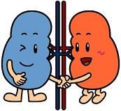 kidney.jpg
