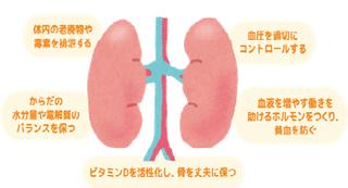 kidney.png